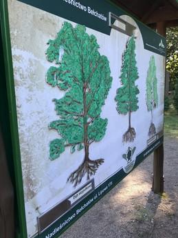Galeria warsztaty leśne